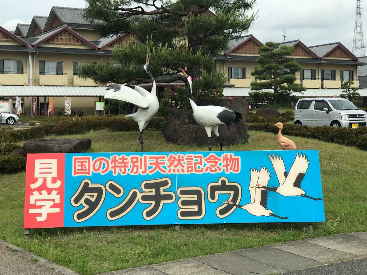 きびじつるの里(岡山県総社市)でタンチョウを見る