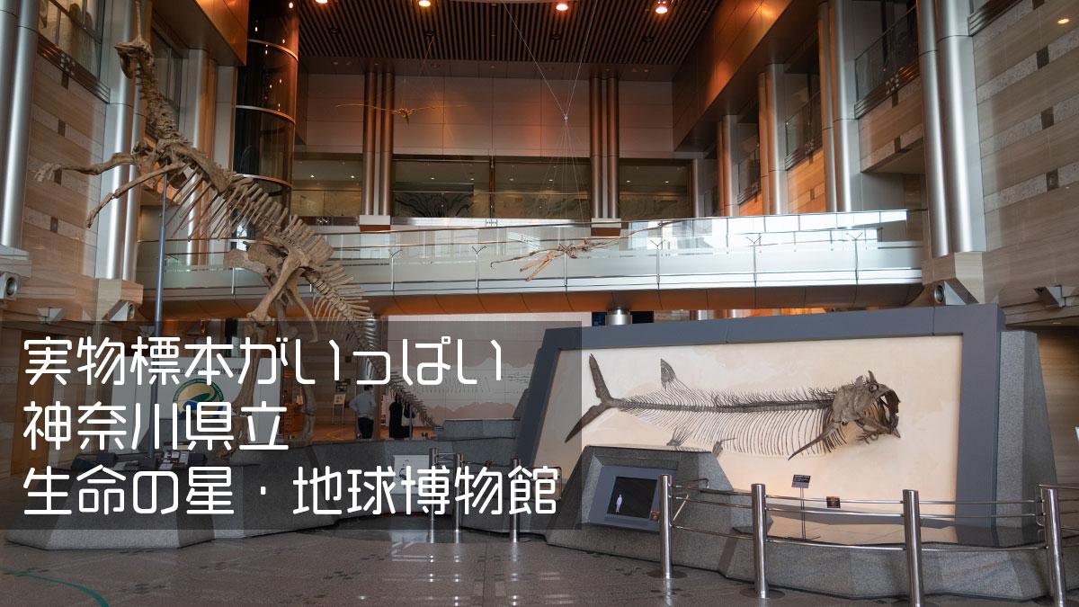 実物大の見上げる展示、神奈川県立 生命の星・地球博物館、入生田駅すぐ